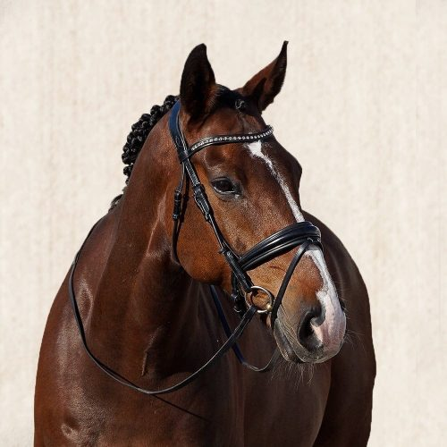 ALEQUI Collina dressage bridle anatomical