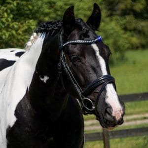 ALEQUI Como anatomical bridle