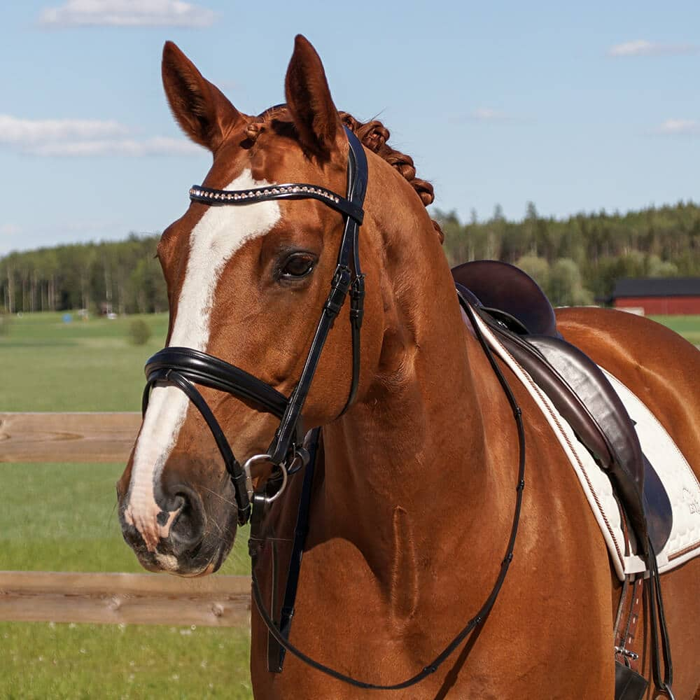 ALEQUI Como anatomical dressage bridle