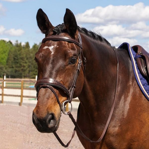ALEQUI Crusie fancy jumping bridle