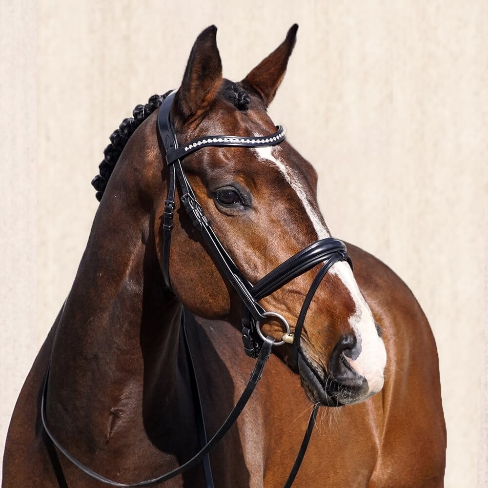 ALEQUI-dressage-bridle-thin-noseband2 (1) copy