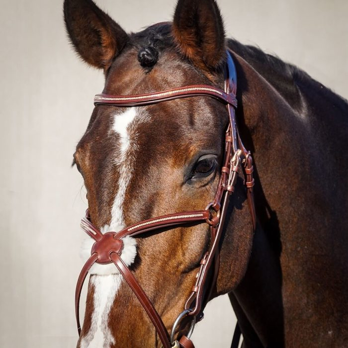 ALEQUI-mexican-jumpingbridle.jpg