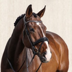 ALEQUI-wide-dressagebridle-full2