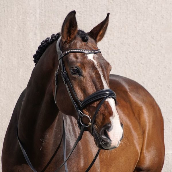 ALEQUI-wide-dressagebridle-full2.jpg