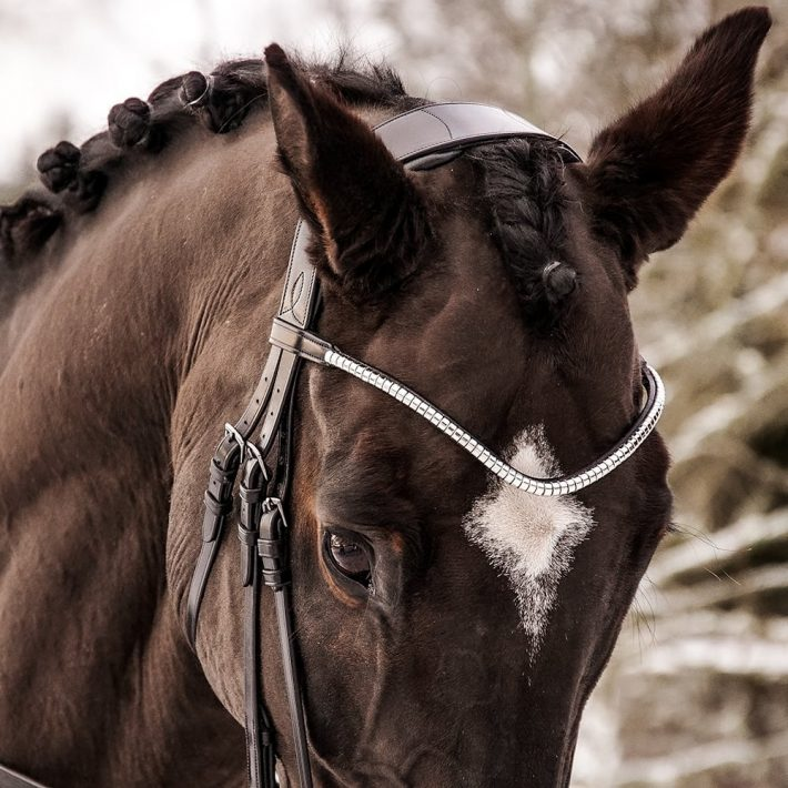 ALEQUI clincher browband closeup
